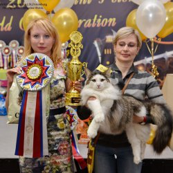 Best Junior World Cats Show 2015